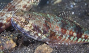 lizardfish7813