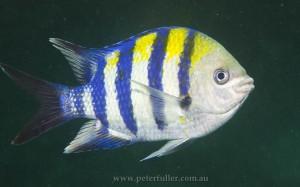 fish5133