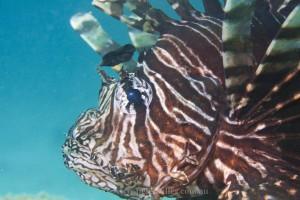 lionfish4976
